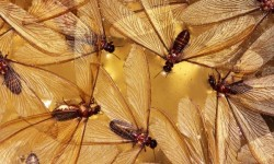 Did you know that termites fly from location to location, call Termicide today to protect your home.